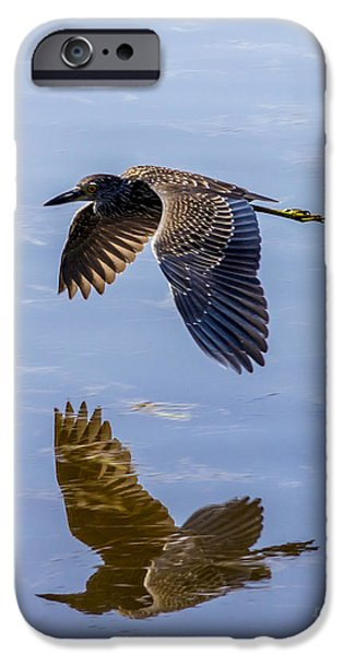 J N Ding Darling National Wildlife Refuge iPhone Cases - Night Heron Fly By 1 iPhone Case by Nancy L Marshall