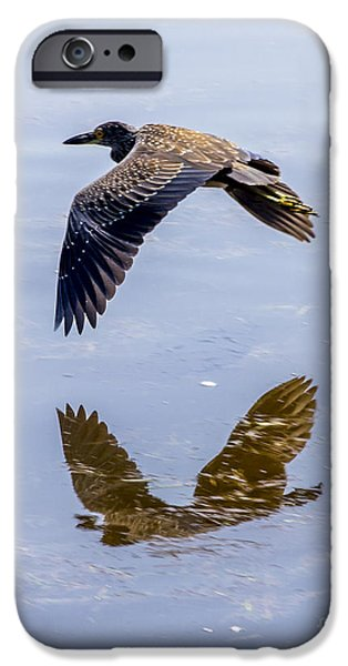 J N Ding Darling National Wildlife Refuge iPhone Cases - Night Heron Fly By 3 iPhone Case by Nancy L Marshall