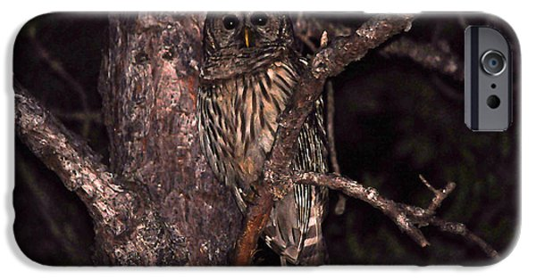 Hooters iPhone Cases - Night Owl iPhone Case by Al Powell Photography USA