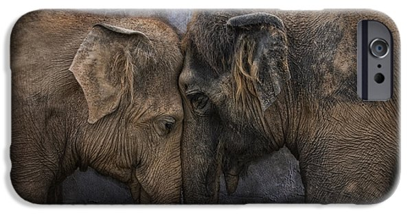Elephants Photographs iPhone Cases - Nighty Night Darling iPhone Case by Joachim G Pinkawa
