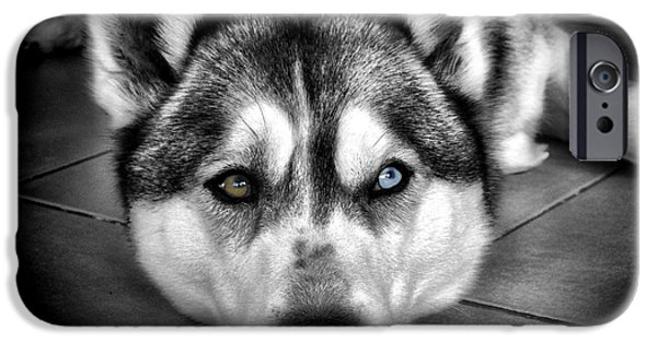 Huskies Photographs iPhone Cases - Niko iPhone Case by Karen Lewis