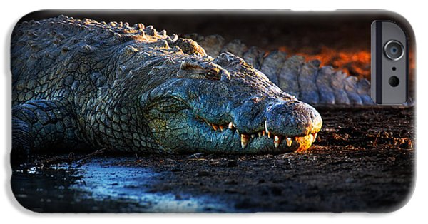 Shoulders iPhone Cases - Nile crocodile on riverbank-1 iPhone Case by Johan Swanepoel