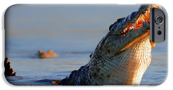 Swallows iPhone Cases - Nile crocodile raising out of water iPhone Case by Johan Swanepoel