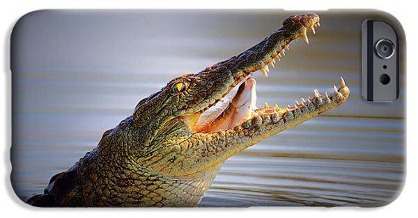 Swallows iPhone Cases - Nile crocodile swollowing fish iPhone Case by Johan Swanepoel