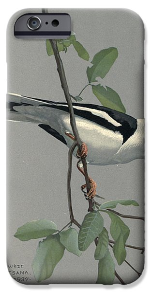 Ethiopia iPhone Cases - Nile Helmet Shrike iPhone Case by Louis Agassiz Fuertes