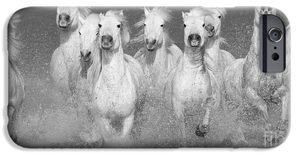 Horse Photographs iPhone Cases - Nine White Horses Run iPhone Case by Carol Walker