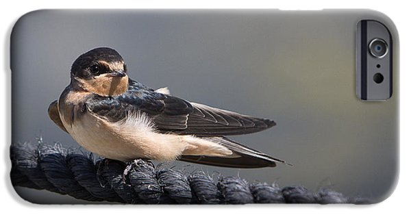 Barn Swallow iPhone Cases - Barn Swallow on Rope II iPhone Case by Patti Deters