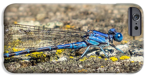 Alga iPhone Cases - Blue-eyed Darner Dragonfly on Stump iPhone Case by Patti Deters