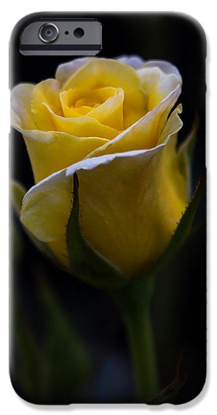One iPhone Cases - Single Yellow Rose iPhone Case by Patti Deters