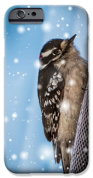 Snowy iPhone Cases - Snowy Downy Woodpecker iPhone Case by Patti Deters