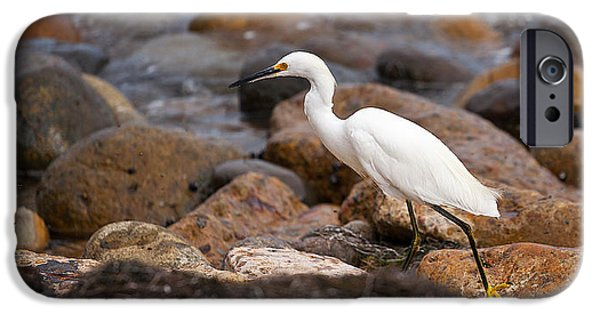 Snowy Egret iPhone Cases - No Re-Egrets iPhone Case by Peter Tellone
