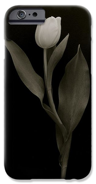 Florals Glass Art iPhone Cases - Noble Tulip iPhone Case by Flower Photography and other Art