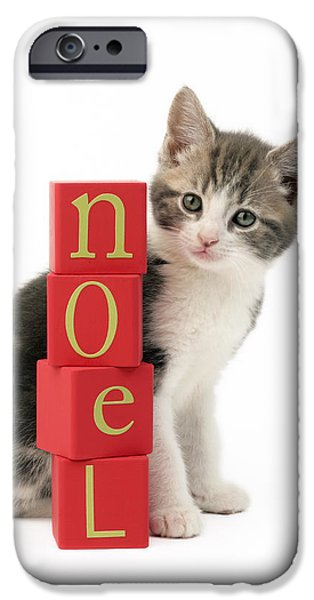 Christmas Eve iPhone Cases - Noel Kitten iPhone Case by Greg Cuddiford