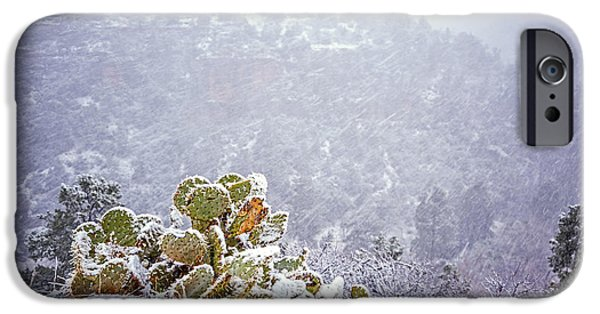 Sedona iPhone Cases - Nopal in Snow iPhone Case by Anthony Citro