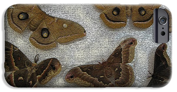 Promethea iPhone Cases - North American Large Moth Collection iPhone Case by Conni Schaftenaar Elderberry Blossom Art