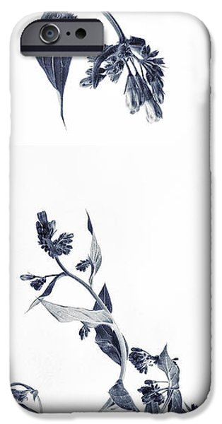 Botanical Photographs iPhone Cases - Northern Bluebells iPhone Case by Priska Wettstein