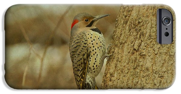 Evansville iPhone Cases - Northern Flicker on Tree iPhone Case by Sandy Keeton