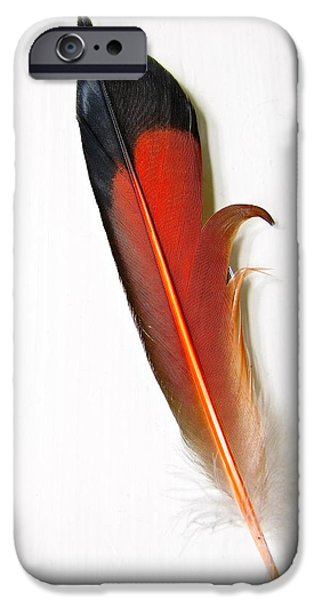 Smithsonian iPhone Cases - Northern Flicker Tail Feather iPhone Case by Sean Griffin