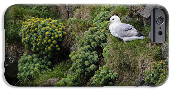 Sea Birds iPhone Cases - Northern Fulmar And Roseroot iPhone Case by John Shaw