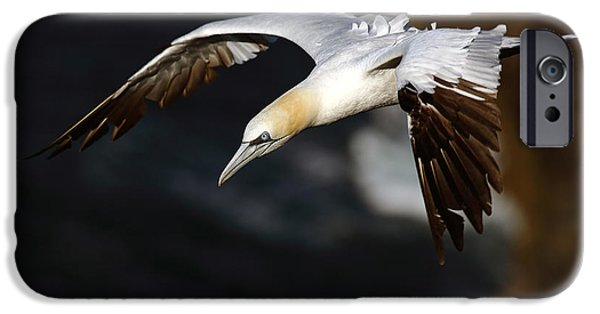 Sea Birds iPhone Cases - Northern Gannet iPhone Case by Grant Glendinning