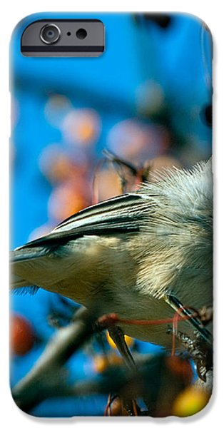 Northern Mockingbird iPhone Case by Bob Orsillo