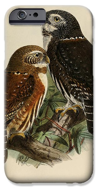Ornithology iPhone Cases - Northern Pygmy Owl iPhone Case by J G Keulemans