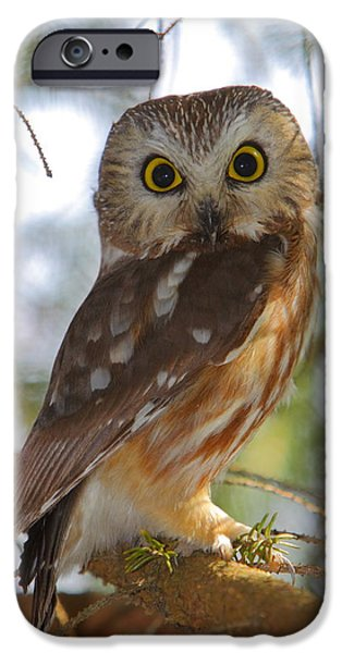 Animal Wisdom iPhone Cases - Northern Saw-whet Owl iPhone Case by Bruce J Robinson