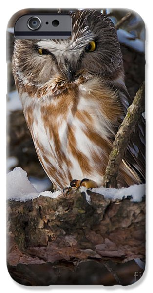 Northern Saw-whet Owl.. iPhone Case by Nina Stavlund