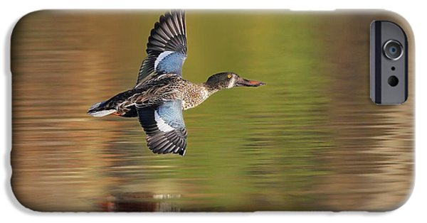 Water Colors Pyrography iPhone Cases - Northern Shoveler in Fligt iPhone Case by Daniel Behm