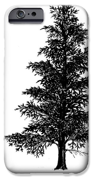 Recently Sold -  - Norway iPhone Cases - Norway spruce drawing iPhone Case by Kerstin Ivarsson