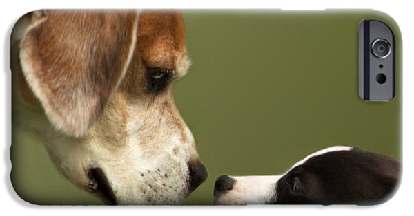 Dog Close-up iPhone Cases - Nose To Nose Dogs 2 iPhone Case by Linsey Williams