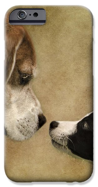 Nose To Nose Dogs iPhone Case by Linsey Williams