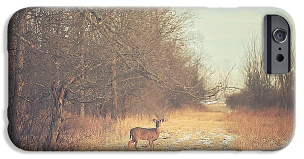Fall iPhone Cases - November Deer iPhone Case by Carrie Ann Grippo-Pike