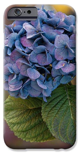 Purple Hydrangeas iPhone Cases - November Hydrangea iPhone Case by Angie Vogel