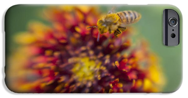 Popular iPhone Cases - Now Rare Honey Bee 1 iPhone Case by Scott Campbell