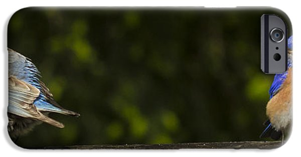 Animals Photographs iPhone Cases - Now thats just plain rude iPhone Case by Jean Noren