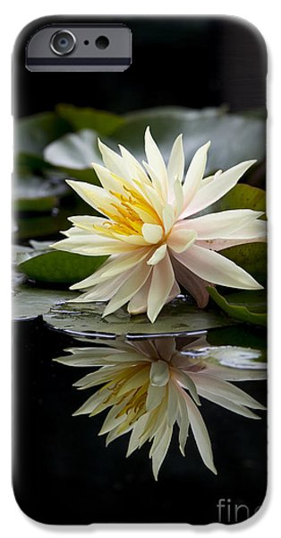 Aquatic Plants iPhone Cases - Nymphaea Maria and Reflection iPhone Case by Tim Gainey