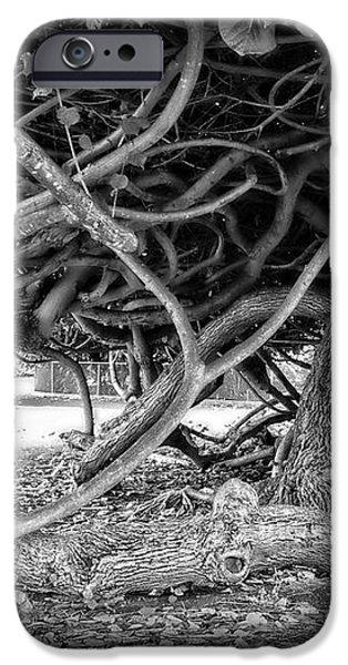 OAHU GROUND VINES - HAWAII iPhone Case by Daniel Hagerman