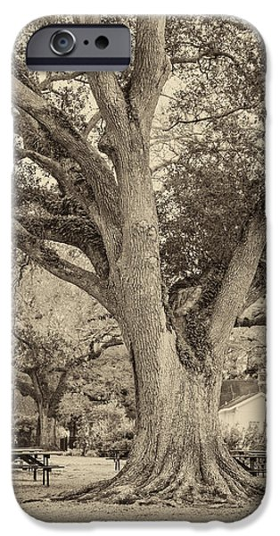 Oak Alley Plantation iPhone Cases - Oak Alley Backyard seoia iPhone Case by Steve Harrington