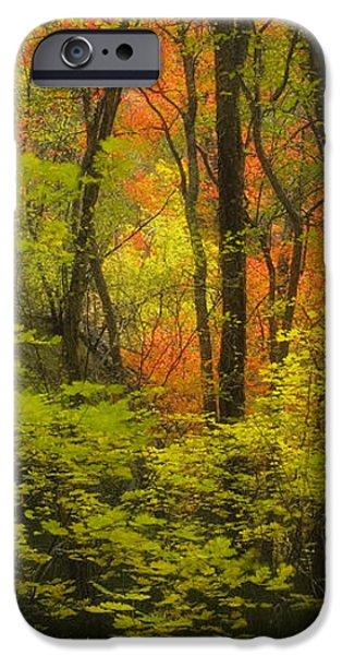 Oak Creek Splendor iPhone Case by Peter Coskun
