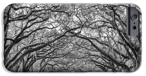 Recently Sold -  - Historic Site iPhone Cases - Oak Lined Avenue Wormsloe Plantation Savannah Georgia iPhone Case by Dawna  Moore Photography