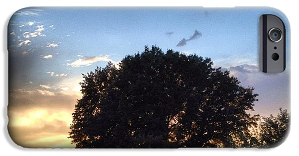 Grass iPhone Cases - Oak Tree at the Magic Hour iPhone Case by Angela Rath