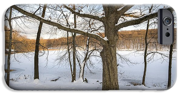 Mighty Oak iPhone Cases - Oak Tree in Snow I iPhone Case by Marianne Campolongo