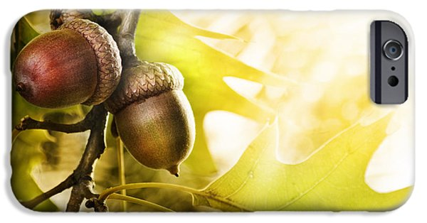 Botanical Pyrography iPhone Cases - Oak tree iPhone Case by Jelena Jovanovic
