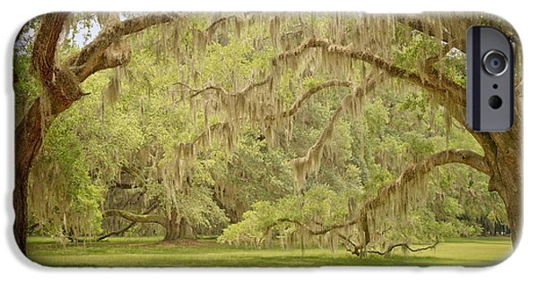 Historic Site iPhone Cases - Oak Trees Draped with Spanish Moss iPhone Case by Kim Hojnacki