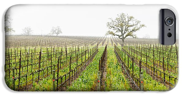 Sonoma iPhone Cases - Oak Trees In A Vineyard, Guerneville iPhone Case by Panoramic Images