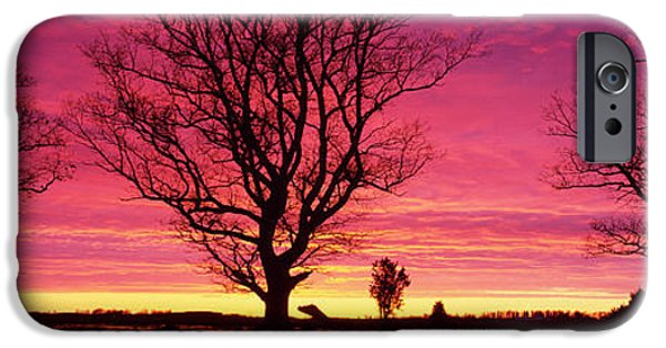 Eerie iPhone Cases - Oak Trees, Sunset, Sweden iPhone Case by Panoramic Images