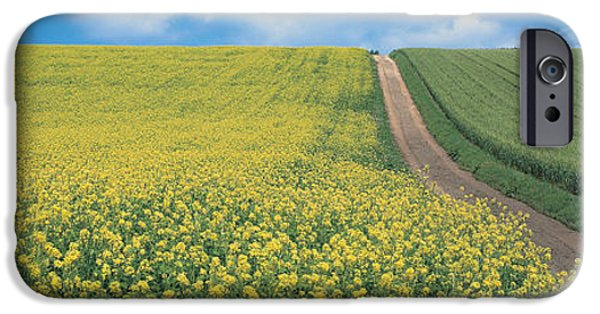 Pathway iPhone Cases - Oats & Rape Blossoms Biei-cho Kamikawa iPhone Case by Panoramic Images