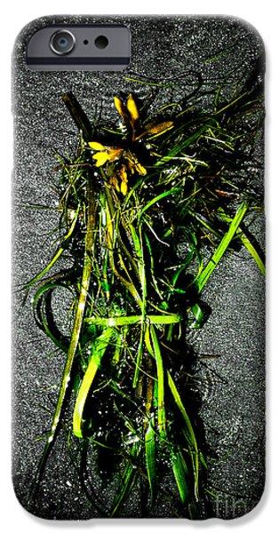 Ocean Bouquet 2 iPhone Case by Venetta Archer