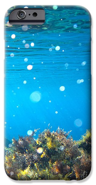 Submerged iPhone Cases - Ocean Garden iPhone Case by Stylianos Kleanthous